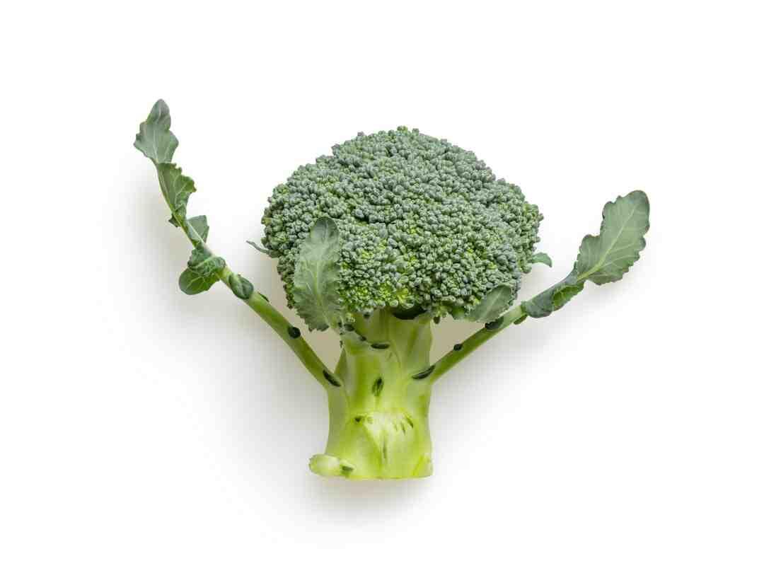 Comment cultiver des brocolis
