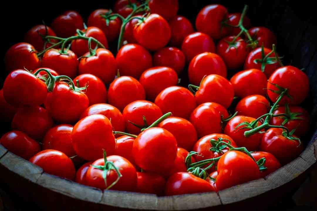Comment cultiver des tomates cerises