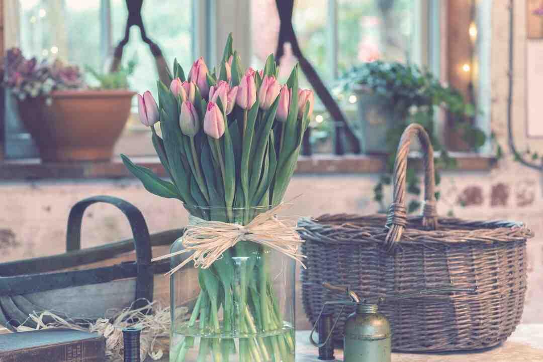 Comment cultiver des tulipes dans des pots