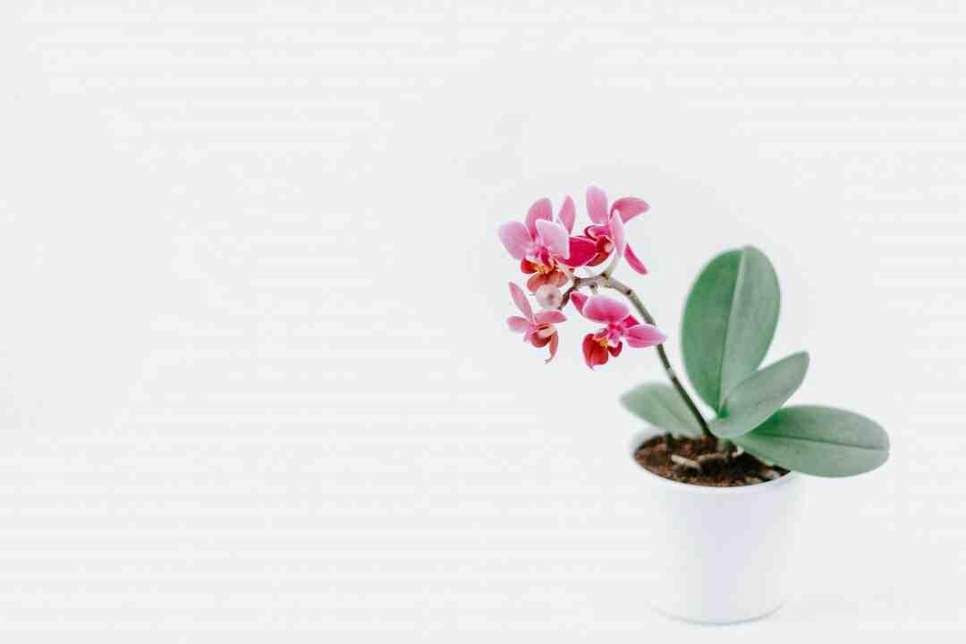Comment fabriquer des pots de fleurs en béton