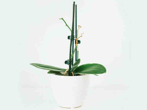 Comment tailler une orchidée Défleurie ?
