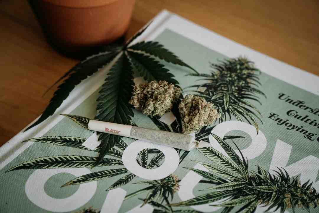 Comment cultiver du cannabis médical