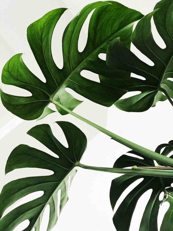 Comment savoir si ma plante est malade ?
