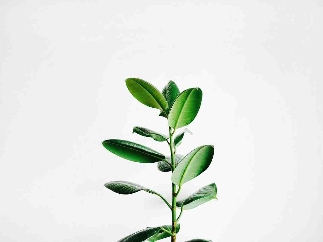 Comment soigner des plantes d'intérieur