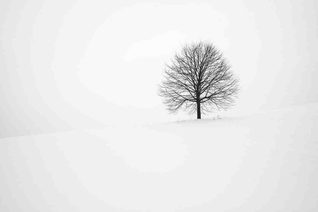 Arbre de judée hiver