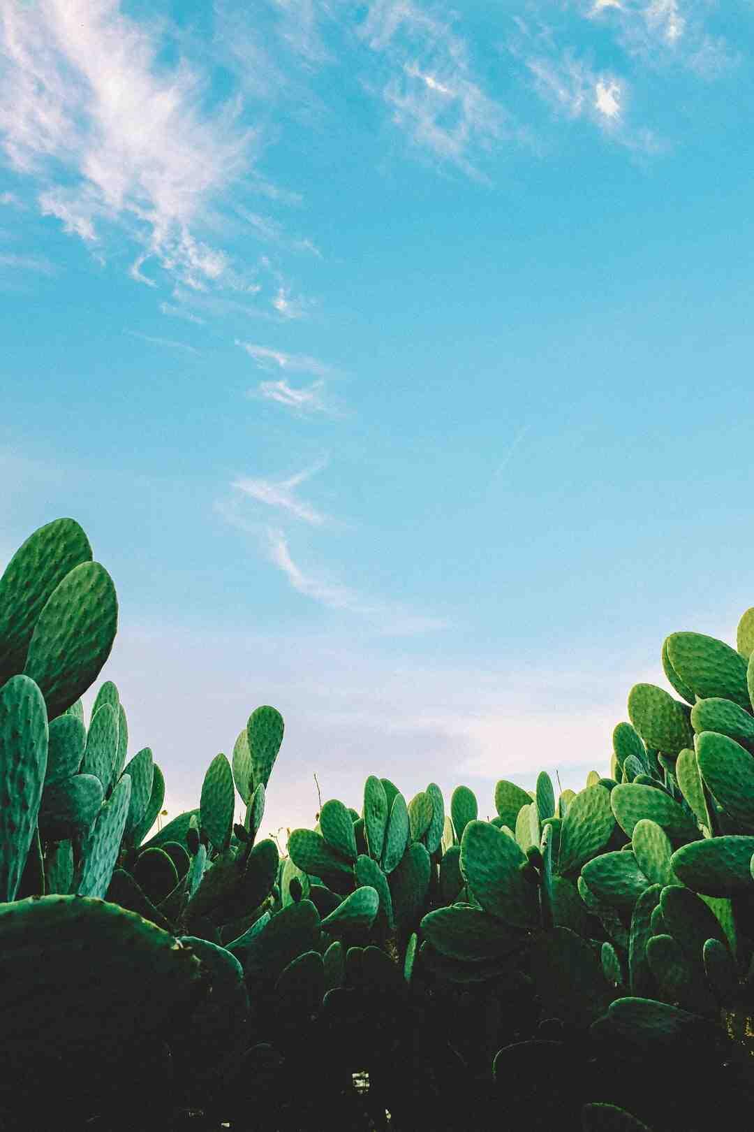 Comment entretenir un cactus