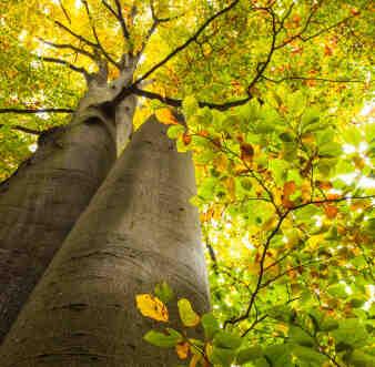 Comment faire estimer une forêt ?